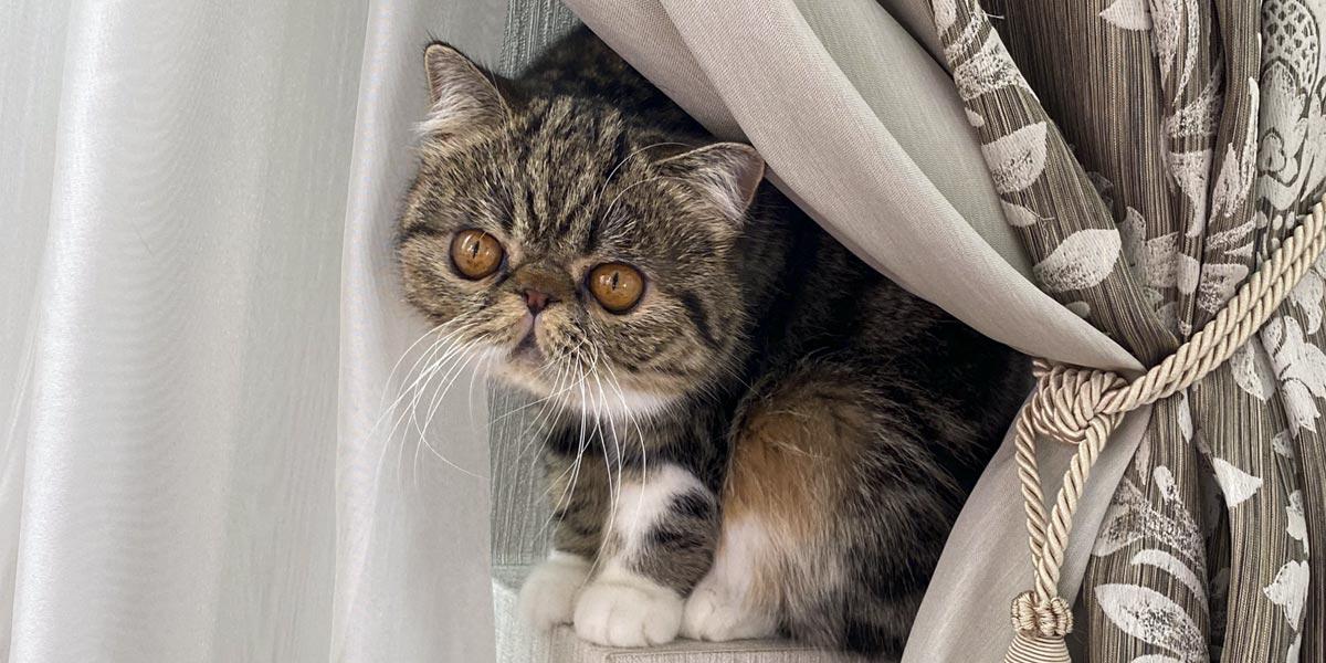 пушистые кошки