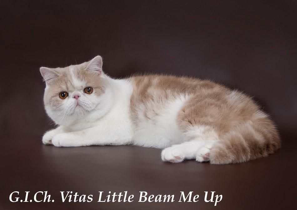 котята питомник