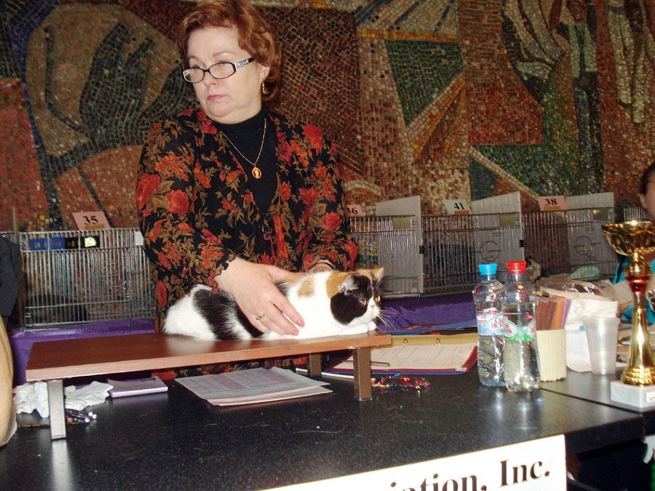 кошки питомника фото