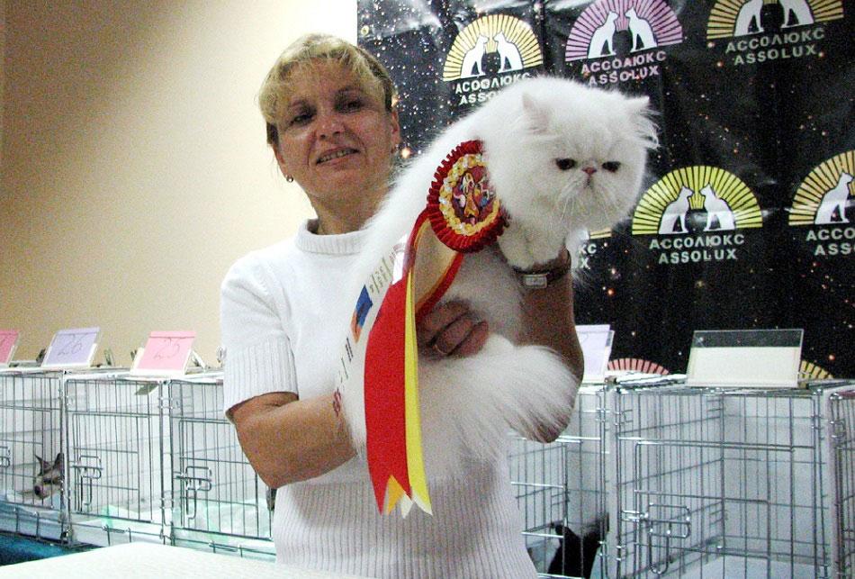 экзот выставка кошек