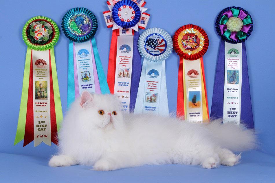 кошки питомник фото