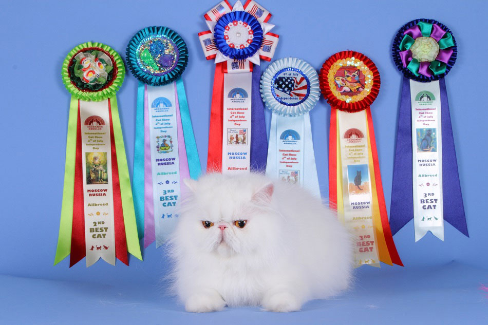 питомник выставка кошек