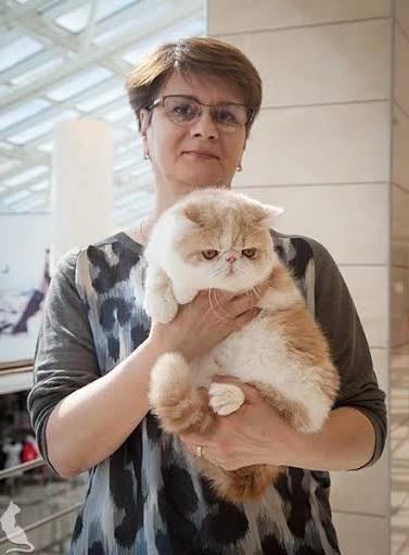 отзывы о котятах фото