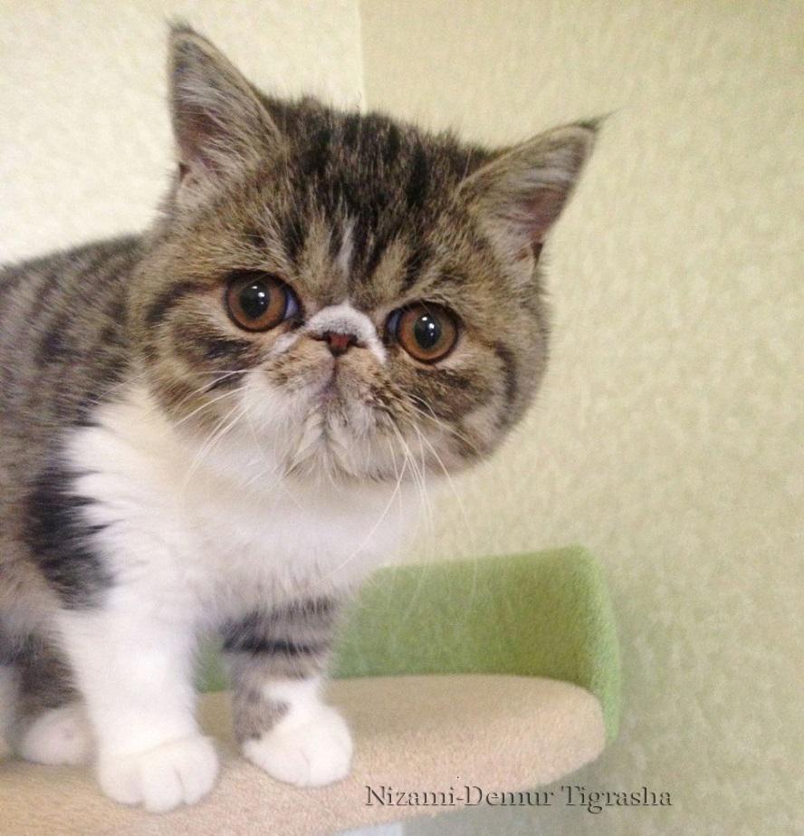 котята плюшевые