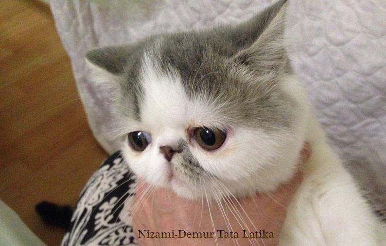 котята пушистые