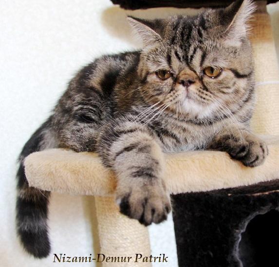 кошка москва