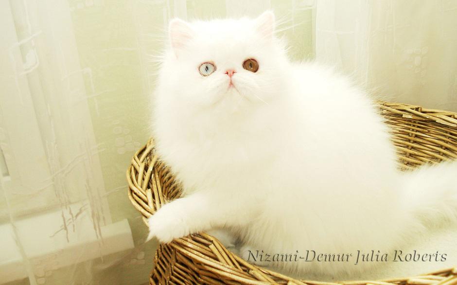 котята питомник ласковые